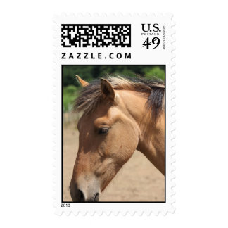 Horse Head Postage Stamps