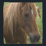 """Horse Hello Bandana<br><div class=""""desc"""">A horses comes up to greet me at a horse farm in Ozark Missouri. Ozark is a small country town just South of Springfield, MO. Looking for more prints or products? Feel free to visit my store: http://www.zazzle.com/timelessmomentsphtgy This photo was taken by Jennifer White with Timeless Moments Photography. All images...</div>"""