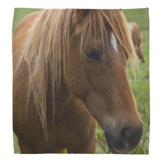 Horse Hello Bandana