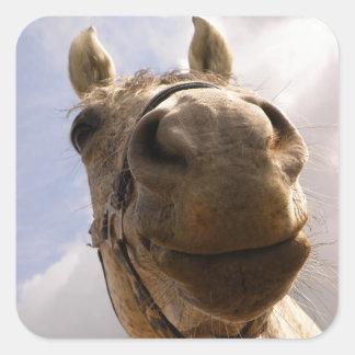 Horse Hello, Closeup of Horse Nose Square Sticker