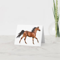 Horse Hello, Love, Thinking of You, Thanks Card