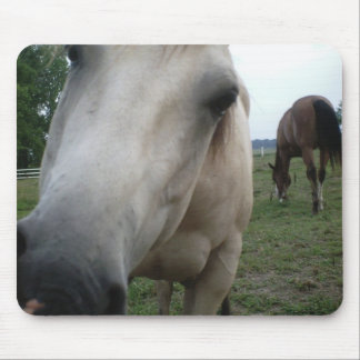 horse hello mouse pad
