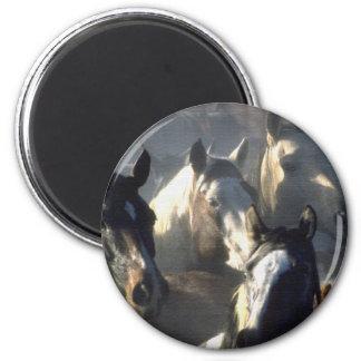 Horse Herd 2 Inch Round Magnet