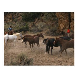 Horse Herding Postcard