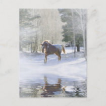 Horse Holiday Postcard