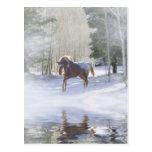 Horse Holiday Postcard Postcard