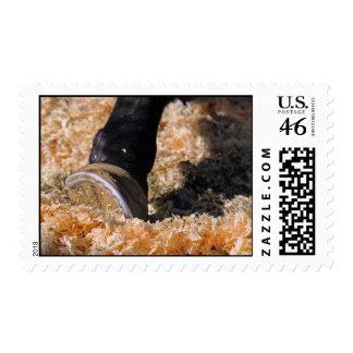 Horse hoof in the shavings postage