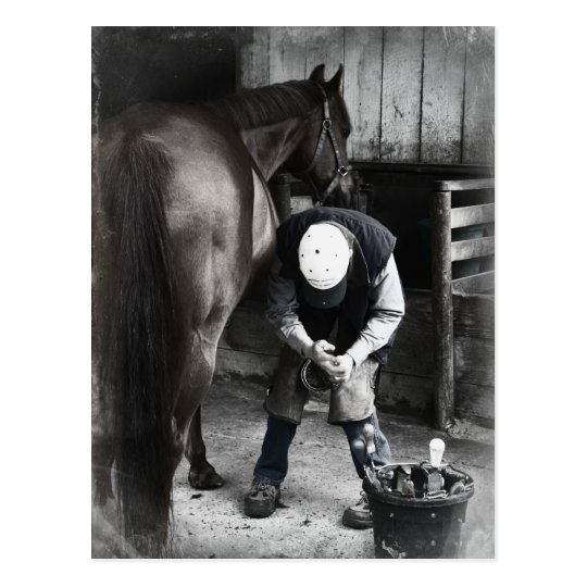 Horse Hoof Trim & Farrier Services Postcard