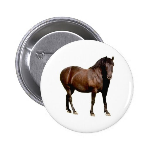 horse horse riding equistrian horse racing pinback buttons
