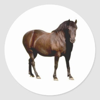 horse horse riding equistrian horse racing classic round sticker