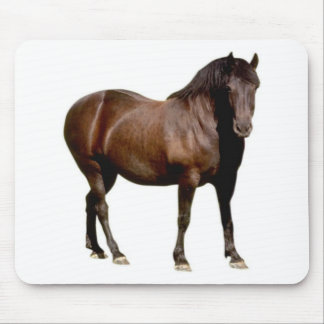horse horse riding equistrian horse racing mouse pad