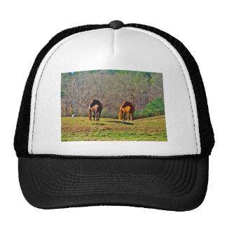 horse horses on hill trucker hat