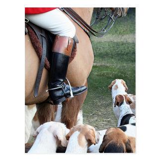 Horse & Hounds Postcard