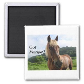 Horse Humor: Got Morgan? 2 Inch Square Magnet