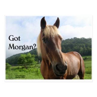 Horse Humor: Got Morgan? Postcard