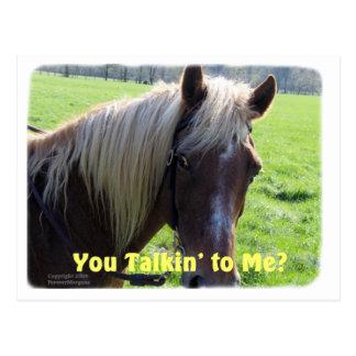 Horse Humor: You Talkin to Me? Postcard
