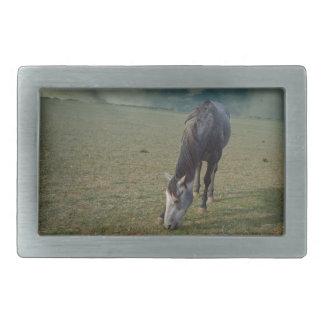 Horse_In_A_Paddock,_ Belt Buckle