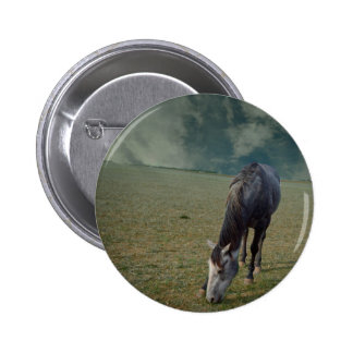 Horse_In_A_Paddock,_ Button