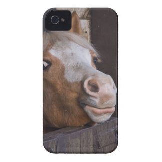 Horse in a Stable Blackberry Bold Case