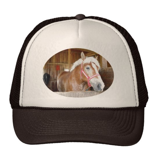 Horse in a stall trucker hat
