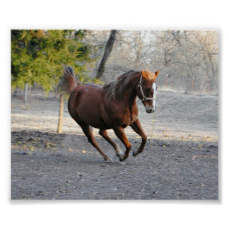 Horse in Action Poster