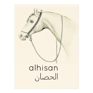 Horse  in  Arabic - vintage illustration Postcard