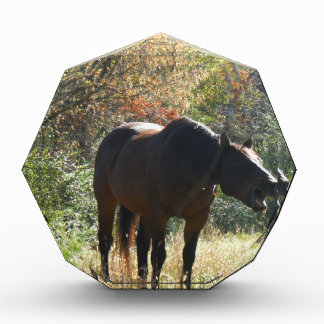 Horse in Autumn Awards