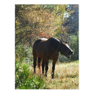 Horse in Autumn Post Cards