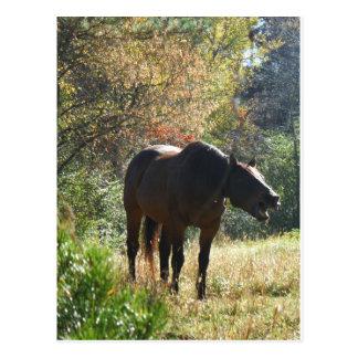 Horse in Autumn Postcard