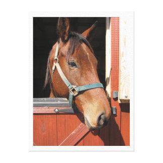 Horse in Barn Canvas Print