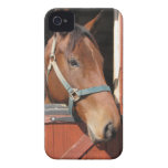 Horse in Barn iPhone 4 Cover