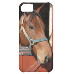 Horse in Barn iPhone 5C Cover