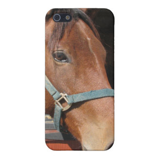 Horse in Barn Cover For iPhone 5