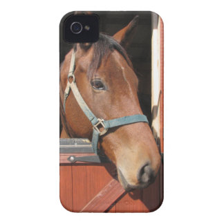 Horse in Barn iPhone 4 Covers