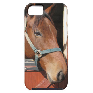 Horse in Barn iPhone 5 Case