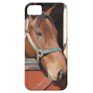 Horse in Barn iPhone 5 Cover