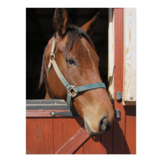 Horse in Barn Poster
