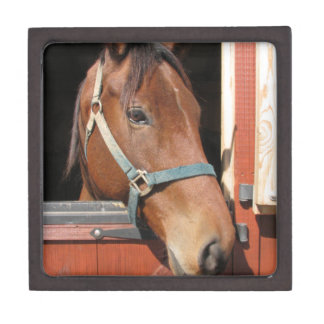 Horse in Barn Premium Gift Boxes