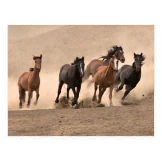 Horse In Fall II Postcard