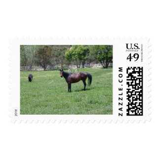 horse in field_56 postage