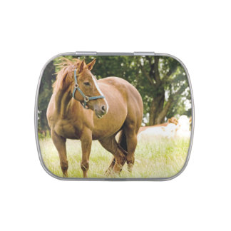Horse in Field Candy Tin