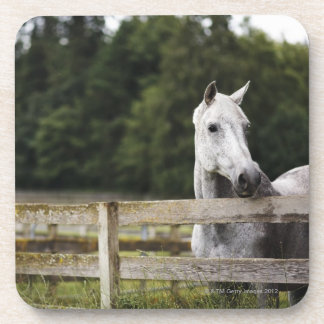 Horse in field looking over fence beverage coaster