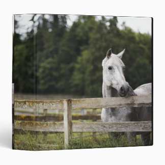 Horse in field looking over fence binder