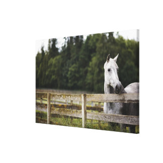 Horse in field looking over fence stretched canvas prints