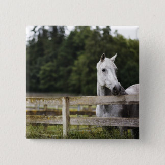 Horse in field looking over fence pinback button