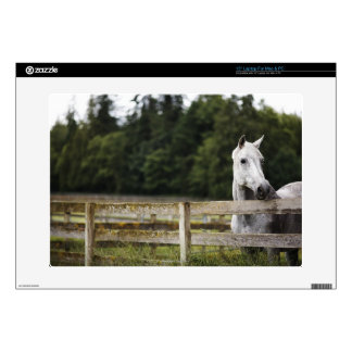 Horse in field looking over fence skin for laptop