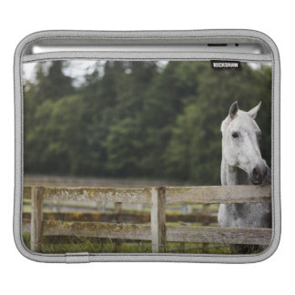 Horse in field looking over fence sleeve for iPads