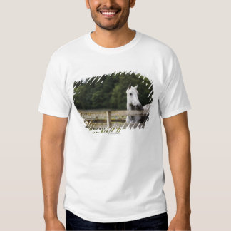 Horse in field looking over fence t-shirts