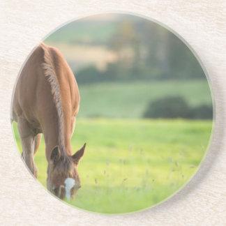 Horse in field near ballyvaloo, Blackwater, Wexfor Coaster