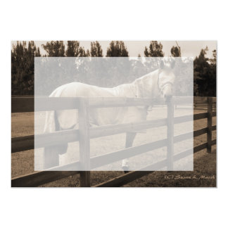 Horse in fly clothes sepia looking back over fence card